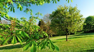 Un arbre dans un parc au printemps